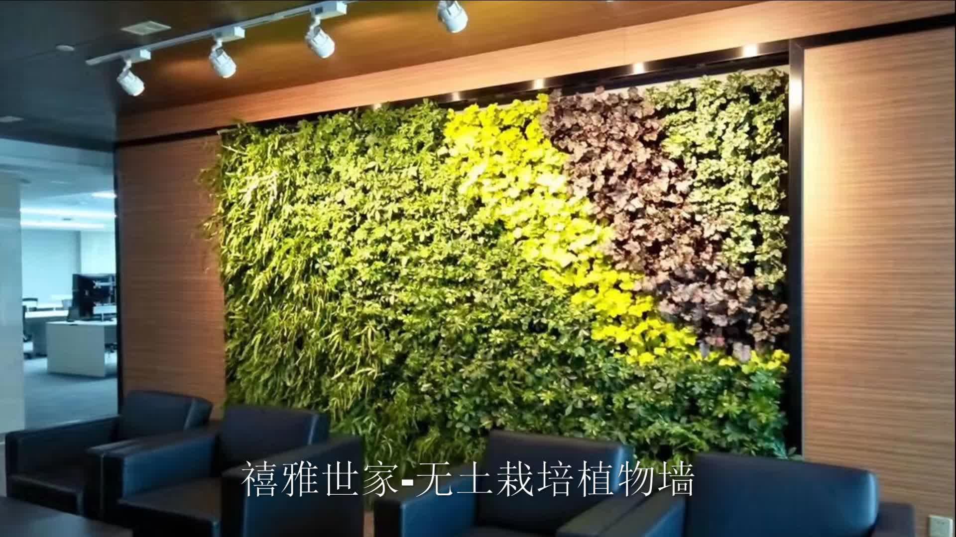 禧雅世家-无土栽培植物绿墙,垂直绿化,水培绿植墙,墙上植物花园